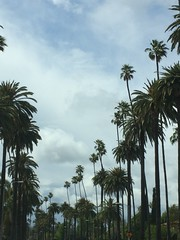 Beverly Hills (zoebranam) Tags: california sky flower tree beautiful beauty cali clouds wow la hill palmtrees beverlyhills