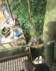 "Ryan sending me up some water whilst we rigged this sycamore over a roof today #wardenstreecare 🌞😰 <a style=""margin-left:10px; font-size:0.8em;"" href=""http://www.flickr.com/photos/137723818@N08/28175718415/"" target=""_blank"">@flickr</a>"