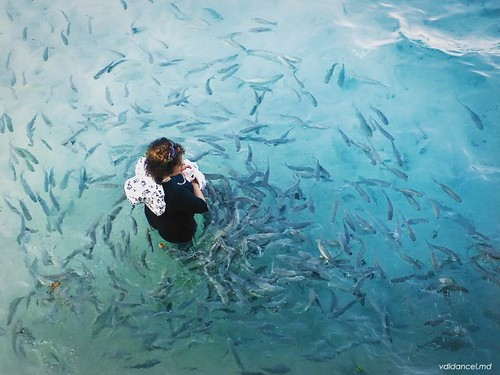 ©dennisdancel  #travel #travelphotography #places #mactan #cebu #beach #feeding #frenzy #fish #shangrila #nature #igers #igermanila #everydayphilippines #everydayasia #everydayphotography #throwback #flashback #flashbackfriday #phonecamera #sek8
