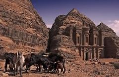 Las cabras de Petra -The goats of Petra (bit ramone) Tags: petra goat jordan cabras jordania bitramone pentaxk5