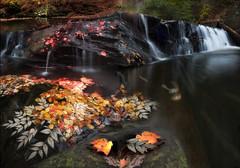 mill creek (wallzeye1) Tags: park fall water leaves landscape waterfall stream hike wallzeye