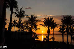 Sonnenuntergang in Sarasota (digital.photo99) Tags: ocean sunset red usa sun black tree rot water golf mexico meer wasser mare sonnenuntergang gulf florida von palm sarasota sonne palme schwarz mexiko palmen ozean