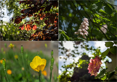 For a good week ahead (Geza (aka Wilsing)) Tags: flowers dof bokeh natureycrap zeissplanar50mm14 afnikkor180mm28ed em1bottomrow d700toprow