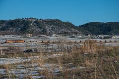 Northbound BNSF near Castle Rock (Michael Karlik) Tags: mountain castle rock train colorado hill front line coal range freight bnsf joint