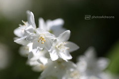 in my secret garden - 5 (photos4dreams) Tags: flower macro blume makro secretgarden photos4dreams photos4dreamz p4d