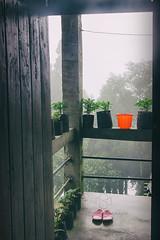 The S T A Y ~ Lepchajagat, Darjeeling (Sandipa Malakar (bristii)) Tags: red mist rain eos asia rainyday monsoon stay gloomyday canon1740l northbengal canon60d lepchajagat darjeelingmountainhilltown monssonmood sandipamalakar