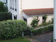 Roses near Bridge (# 7) (JP Newell) Tags: cahors midipyrnesregion roses french france flowers gardens