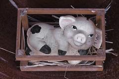D3211-Cerdo contemporneo (en cermica) (Eduardo Arias Rbanos) Tags: sculpture lumix pig box humor humour caja panasonic escultura pottery g6 cashbox cermica cerdo moneybox hucha eduardoarias eduardoariasrbanos
