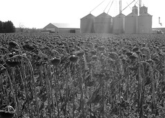 Nature VS Industry (Becky Fisco) Tags: portrait blackandwhite nature portfolio