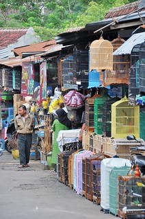 malang - java - indonesie 4