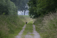 I saw, I saw a p....... (Nederland in foto's) Tags: road nature netherlands grass cat nikon track outdoor nederland willow gras poes countryroad weg wilgen landweg natuurfotografie naturephotographer outdoorphotography paulvandevelde pdvandevelde nederlandinfotos padagudaloma