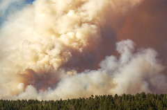 DSC_0348 fire hdr 850 (guine) Tags: grandcanyon grandcanyonnationalpark canyon northrim fire smoke fullerfire trees plants hdr qtpfsgui luminance