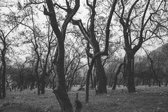 Black Forest (Ali Sabbagh) Tags: bnw salalah oman canon eos7d trees forest black gloom art pjotography nature landscape