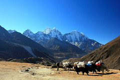 On the route (anna steppenwolf) Tags: mountains himalayas nepal landscape mountainrange yaks