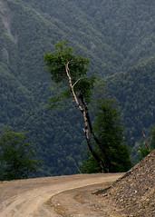 Nialdagh range 08b (Ilkin Kangarli) Tags: caucasus azerbaijan mountains gabala кавказ азербайджан горы габала