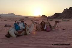 "Wadi Rum, Jordan, Our ""Jeeps"" resting at the sunset (ssspnnn) Tags: camel camelo camellos desierto desert deserto animais animals snunes spnunes nunes spereiranunes panasonic lumixfz200 jordan wadirum canyon caon cannon cnion wow"
