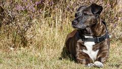 Sally (Kelly Ruff) Tags: dog cross common canon 7d 20700