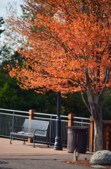 A good spot (James_D_Images) Tags: bench tree streetlamp fence autumn fall fallleaves fallfoliage colour orange leaves blaine washingtonstate pacificnorthwest newspaper peaceful hbm