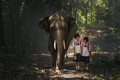 Family of elephants. (visootuthairam1) Tags: adventure animal asia breathe country countryside destination easy elephant endangered ethnicity exotic forest fresh friendship fun furnishing green group happiness herbivore holiday indian journey jungle leaves leisure mahout mai natural nature outdoors path peaceful plant respire ride road rugged seat species travel trekking tropical trunk vacation walk water