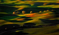 Photo Synthesis (Sapna Reddy Photography) Tags: palouse greenery hills grass color sunlight spring washington farming agriculture outdoor light nikon