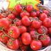tomates_bio