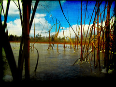 Frozen In Time (Groovyal) Tags: lake cold art ice water grass reeds frozen 206 nj route pinelands bog whartonstateforest frozenintime hammonton groovyal phoptography
