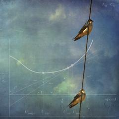 sacred geometry (anniedaisybaby) Tags: blue sky birds wire backyard swallow migration avian timjones purplemartin prognesubis bsquare flightpatterns pareeerica skeletalmess texturesthanksto arielacrobats sacredgoemetry