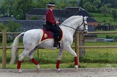 2015.05.16 - Son et lumire chez Carine Joseph (NosChevaux.com) Tags: horses horse cheval pre chevaux paard paarden spectacle chevalespagnol spectaclequestre noschevaux noschevauxcom sartcustinne