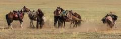 Leakage of three horses!