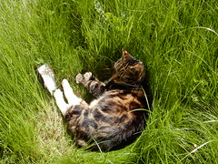Cat's In The Grass... (deltrems) Tags: sleeping grass cat garden pussy lawn asleep barney pussycat basking