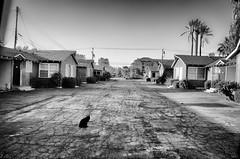 FARMHOUSE MOTEL (PhotographerJamesOrtiz) Tags: california ca cats black abandoned cat nikon highway riverside farm route forgotten interstate roadside 395 urbex bando d5100