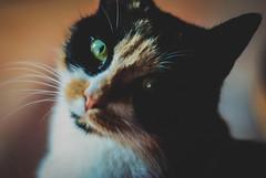 (anita agridulce) Tags: color cat ojo 50mm nikon kitty bigotes gato kitkat cateye catlover