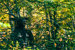 Bosque Encantado (Seba Silva) Tags: chile forest photoshop 50mm bosque charmed lightroom a57 preset bobo minoltalens sonyalpha macro28 slta57 sebastiansilvaogalde