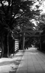 SEPARATION (Dinasty_Oomae) Tags: zorki blackandwhite bw monochrome blackwhite shrine outdoor chiba approach  torii  miyamoto      zorki4  kmz    funabasi  4  ifuhishrine funabashitaijingu