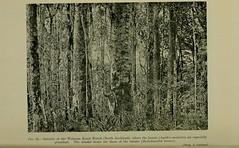 Anglų lietuvių žodynas. Žodis agathis australis reiškia <li>Agathis australis</li> lietuviškai.