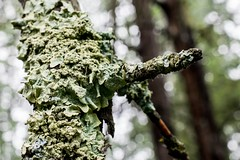 (fancygrade) Tags: tree nature forest moss lichen