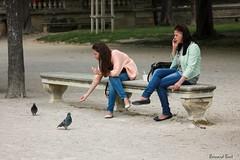 Au Jardin de la Fontaine (Bernard Bost) Tags: 2016 canon languedoc gard nmes jardindelafontaine frangine pigeon