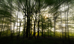 temple newsam woods (rockindave1) Tags: trees woods arty templenewsum brury canoneos5dmark2 adobecs5