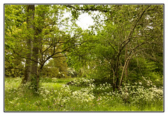 Springtime in the Woods (Audrey A Jackson) Tags: colour nature leaves woodland blossom branches springtime wolverhampton wightwickmanor canon60d 1001nightsmagiccity