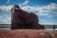Stranded in a Sea of Flowers (explored) (*ScottyO*) Tags: pink flowers red sky history rotting clouds port boat rust iron ship decay south australia adelaide sa hull hulk wreck mangroves southaustralia steamer portadelaide muttoncove