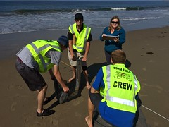 ESRM sandy beach monitoring El Capitan State Beach 05-20-15e
