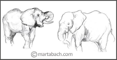 marta_bach-elefantsjpg