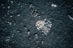 My Trampled Heart (spaceyjessie) Tags: hawaii leaf rocks heart path footprints maui dirty dirt trail haleakala hana hi trampled shape sorrow crushed pipiwaitrail haleakalanationalpark steppedon pipiwai