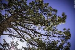 Pinos Pinos Pinos (Sal Martnez // Photojournalist) Tags: california sky naturaleza nature forest dark de mexico star woods san sierra pedro bosque unam astronomy baja instituto martir astronoma