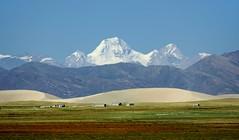 The snow peak of Mt Kubi Gangri and sanddunes, Tibet 2015 (reurinkjan) Tags: desert grassland sanddunes tar 2015 tibetautonomousregion tsang  tibetanplateaubtogang tibet natureofphenomenachoskyidbyings landscapesceneryrichuyulljongsrichuynjong naturerangbyungrangjung landscapepictureyulljongsrimoynjongrimo landscapeyulljongsynjong drongpacounty earthandwaternaturalenvironmentsachu tibetanlandscapepicture janreurink  kubigangri6859m