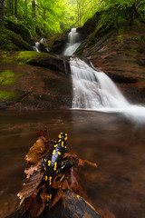 Director of Waterfall (tyunkata) Tags: nature rain forest canon landscape fire waterfall long exposure magic salamander bulgaria photograph salamandra balkan stara planina kopren
