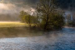 Misty Morning (Ralf Pelkmann) Tags: morning blue tree green misty fog standing river out mood foggy danube