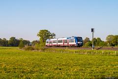 IMG_0009 (BildFlut) Tags: train hamburg wiese rail neumnster akn