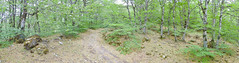 Parco delle Madonie (Michael Adams in Amsterdam) Tags: panorama landscape places sicily parcodellemadonie
