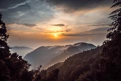 -53 (billlushana1) Tags: lake tree forest canon landscape sony taiwan   wangyou  ef1740mmf4lusm forest sonya7r